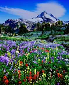 central oregon wildflowers – Mike Putnam Landscape Photography | Fine Art landscape Images by Bend, Oregon Photographer, Mike Putnam