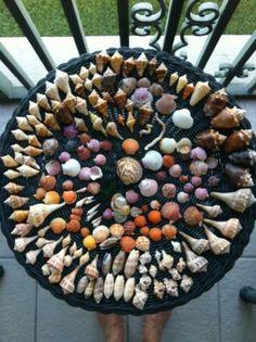 shells from Sanibel, FL.