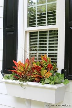 To Plant A Fall Window Box - Uncommon Designs Fall Window box planting Thriller-Filler-SpillerFall Window box planting Thriller-Filler-Spiller
