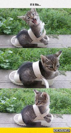 Kitty Fits In Shoe
