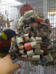 newspaper parrot enrichment http://nationalaquarium.files.wordpress.com/2012/11/photo-3.jpg