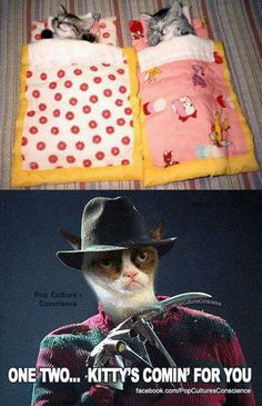 Love it!! Freddy and grumpy cat my two favorite things!