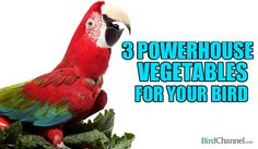 """Kale, watercress and Chinese cabbage take """"healthy"""" to a whole new level. Find out how."""