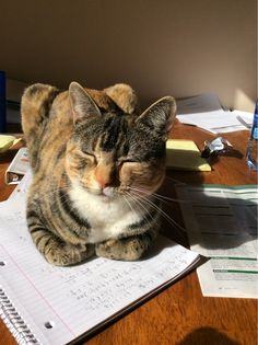 Post with 4 votes and 312 views. Tagged with ; She always sits on any sort of papers or books I have in front of me, hard to say no to that face Pretty Cats, Beautiful Cats, Baby Cats, Cats And Kittens, Silly Cats, I Love Cats, Cool Cats, Animals And Pets, Funny Animals