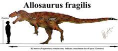 Allosaurus fragilis.
