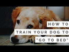 Train your dog to sit, stay, down, out, and go to bed with these easy tricks. Watch these videos to easily train your dog. Training Your Puppy, Dog Training Tips, Leash Training, Agility Training, Toilet Training, Dog Agility, Training Plan, Pet Dogs, Dogs And Puppies