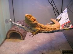 Beardie Hammock I made Trixie a cute pink camo hammock. She has yet to use it. She did put her head on it for a minute though lol. Cute little dragon.