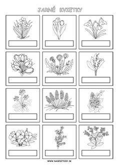 Jarné kvietky - pracovný list Spring Art, Spring Crafts, Carnival Crafts, Plant Science, Paper Birds, Types Of Craft, Spring Activities, Nature Journal, Elementary Science