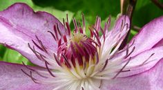 Les plantes grimpantes | botanic.com