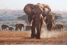 """King's March"" - 24"" x 36"" oil Two big elephant bulls approach in the dust. ""King's March"" - African Originals African Animals African Paintings"
