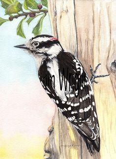 Green-wing Teal Duck 11x14 Art Print Edition Size 150 Birds artist Doug Walpus