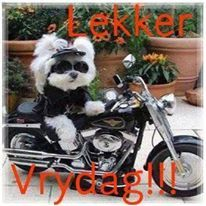 Afrikaans Harley Davidson Quotes, Harley Davidson Motorcycles, Goeie More, Happy Friday, Bike, Vehicles, Funny, Dogs, Animals