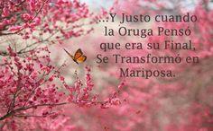 http://mimundo425.blogspot.com/