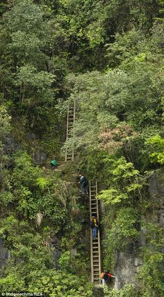 Terrifying: Children clamber down these unsecured ladders to get to school in Hunan province, China Dangerous Roads, Walk To School, Largest Countries, Travel News, Travel With Kids, Rafting, Sri Lanka, Great Places, Life Lessons