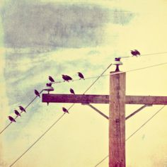 wire & birds
