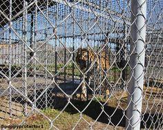 Help Tony the tiger