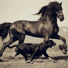 My 2 most Favorite domestic animals