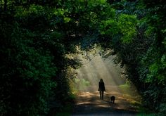 A woman and her dog walk through a ray of sunlight in Leipzig, eastern Germany, on September 26, 2011. Meteorologists forecast sinking temperatures for the following days in the region.