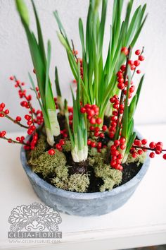 paperwhites for christmas gift - Google Search