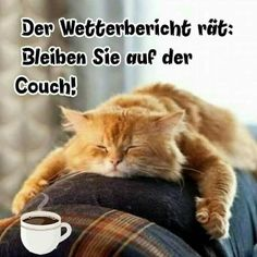 Funny Funny, Source by videos wallpaper cat cat memes cat videos cat memes cat quotes cats cats pictures cats videos 9gag Funny, Funny Cats, Funny Animals, Ginger Kitten, Ginger Cats, Baby Chipmunk, Cute Ginger, I Need A Nap, Cute Baby Cats