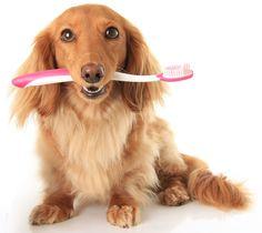 Seu cão tem mau hálito?