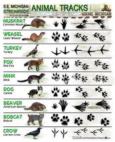 more animal tracks