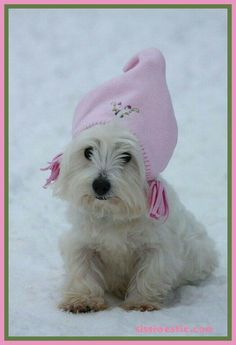 In a word - adorable! Animals And Pets, Cute Animals, Pet Dogs, Doggies, West Highland Terrier, White Terrier, Pooh Bear, White Dogs, Westies