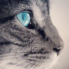 No silêncio do teu olhar tudo é calma...