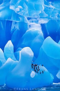 Chinstrap penguins on iceberg, Antarctica © Frans Lanting by beulah