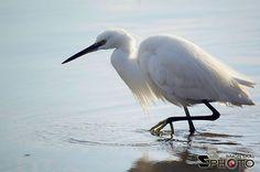 #aquaticbird #bird #sardinia  By Simon Ska Photography