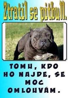 ZTRATIL SE PITBULL, tomu, kdo ho najde, se moc omlouvám. English Jokes, Funny Quotes, Funny Memes, Sad Stories, Animals And Pets, French Bulldog, Haha, Funny Pictures, Learning