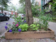 Jardiner pour les abeilles et les pollinisateurs - Agriculture urbaine Montréal