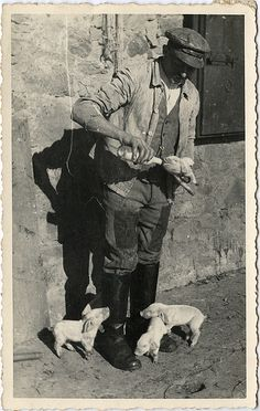 feeding piglets, germany, 1942......I love how these little babies know to stick around for the milk, and this man looks like he's had such a hard day already but never forgot that the babies needed to be fed....love it.