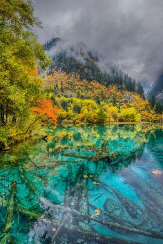 Underwater forrest on 500px by Anton , Moscow, Russia☀Nikon D800934✱1400px-rating:86.9