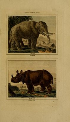 Elephant and Rhinoceros. Buffon's Natural history v.7 London:Printed for the Proprietor, and sold by H. D. Symonds,1797-1807. Biodiversitylibrary. Biodivlibrary. BHL. Biodiversity Heritage Library