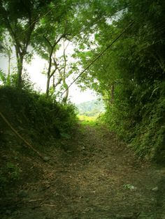 The Pathway - taken at Patag, Silay City, Philippines.  At 490 meters above sea level, this place was the last frontier of the Japanese Army in Negros Island during the Second World War / Ma. Luisa Gonzaga