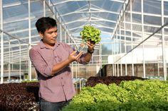 Organic hydroponic vegetable garden open farm by Sirisak