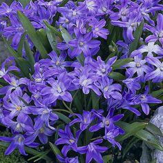 Photo by Catty Giovinne Planting Bulbs, Planting Flowers, Peaceful Places, Fall Season, Beautiful Creatures, Beautiful Flowers, Birds, Seasons, Purple