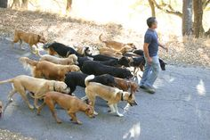 Cesar - pack walks