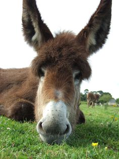 Donkey....with.hair...