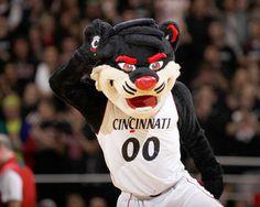 Cincinnati Bearcats Mascot Picture at Cincinnati Bearcat Photos