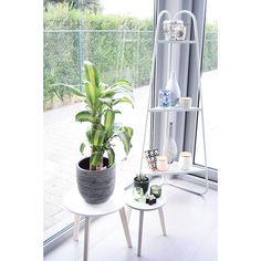 #kwantum repin: Bijzettafel VARESE > https://www.kwantum.nl/meubelen/tafels en hoeketagère CADIZ > https://www.kwantum.nl/tuin/tuindecoratie/overige-tuindecoratie/tuin-tuindecoratie-overige-tuindecoratie-hoeketagere-cadiz-groen-0239005 @ cindyvervoort -  To finish a pic from my own home  Love my new plant!!!  #plants #green #myhome #gardenview #urbanjungle #pastel #gray #interior #interiorlove #modernliving #modernhome #inspiration #homedeco #homedetails #inspo #interior
