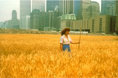 Agnes Denes's Wheatfield / Journal / Nothing Major