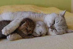 Two kittens with their Mommy