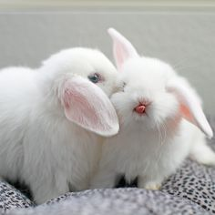 I never realized how cute baby bunny tongues are… :-)