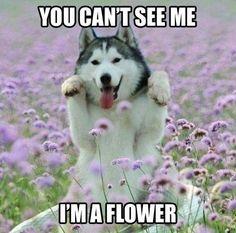 I'm a flower!