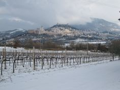Snow on Grechetto vineyards and Assisi in the background