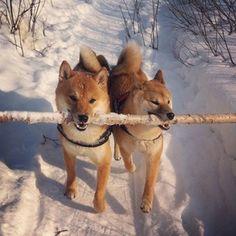 my stick / roman kaspustin