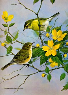 SymphonyForLove: Inspiring Birds quotes /beautiful Birds painting/Basil Ede Painting