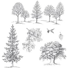 Lovely As A Tree Clear-Mount Stamp Set by #Stampin'Up!  A fabulous stamp set for any season.  Only $19.95.